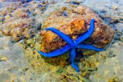 Starfish on the coral reef Blue starfish Star fish on the seashore, sea surface photos, sea creatures, marine aquariums. Reef garden. Sea creatures.