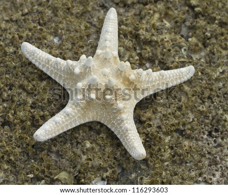 Starfish on the rock beach