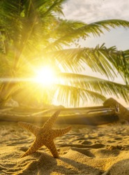 Starfish on the tropical  beach at sunset