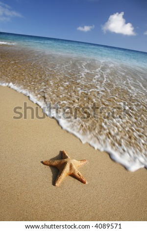 Starfish on tropical beach with waving coming towards it