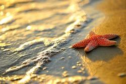 starfish on wet sand at sunrise/sunset