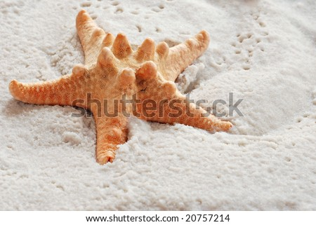 Starfish on wet sand.  Close-up with shallow dof.