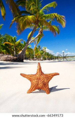 Starfish on white sand  on caribbean beach, Dominican Republic