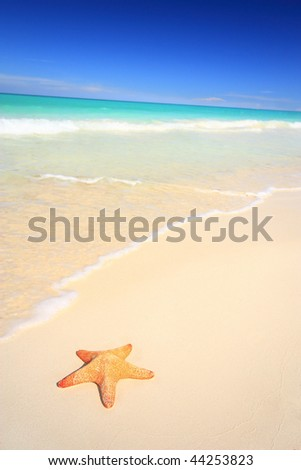Starfish on white sand tropical beach. Vacation & Travel collection.