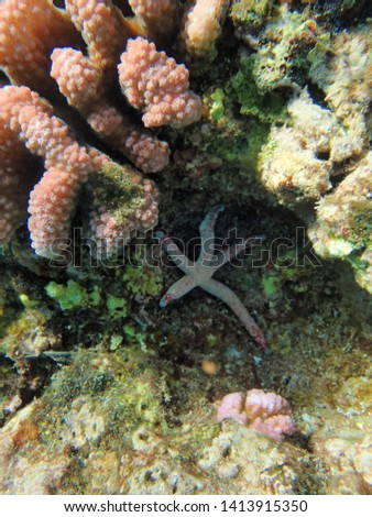 Starfish or sea stars are star-shaped echinoderms belonging to the class Asteroidea.  About 1,500 species of starfish occur on the seabed in all the world's oceans, from the tropics to polar waters. #1413915350