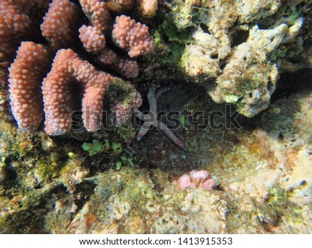 Starfish or sea stars are star-shaped echinoderms belonging to the class Asteroidea.  About 1,500 species of starfish occur on the seabed in all the world's oceans, from the tropics to polar waters. #1413915353