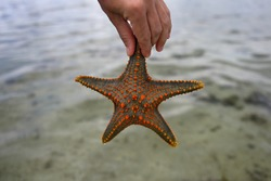 Starfish pulled from the ocean. A man's hand holds a live, large beautiful and bright starfish in his hands. The starfish is a bright orange color with a gray-yellow base on the water background.