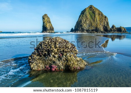 starfish  sea stars  clinging...