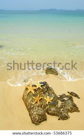 starfish sitting on beach