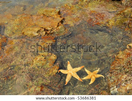 starfish sitting on beach - stock photo