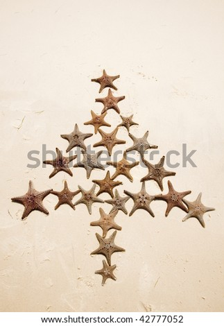 starfish tree