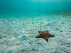Starfish underwater over white sand an sea grass.