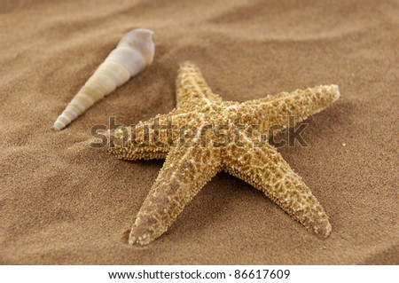 starfish with sea shells in the beach sand background