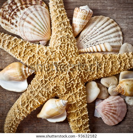 Starfish with seashell on wooden log