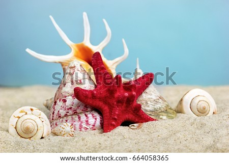 Starfishe on a seashell. Like throne of sea king.Creative background.conept of summer