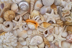 Starfishes and sea shells background, lots of amazing seashells, corals and starfishes mixed together