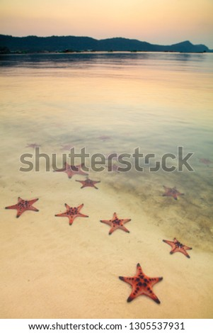 Starfishes at Starfish Beach, Phu Quoc, Vietnam