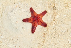 Starfishes from Starfish Island in the Philippines