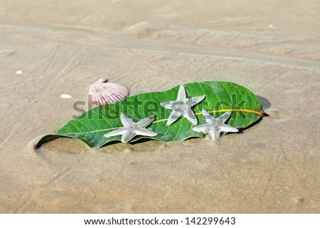 Starfishes , sea shell and leaf on the  sand. Summer vacation background