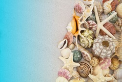 Starfishes, sea urchin and seashells on white sand background with copy space