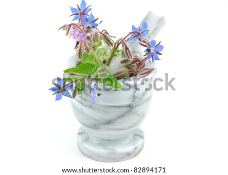 Starflower or Borage in Pestle and Mortar