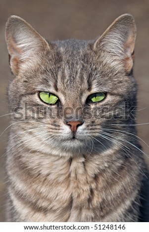 Staring cat with green eyes
