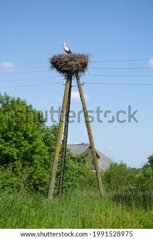 Stark's nest built on electricity pole Stock photo ©
