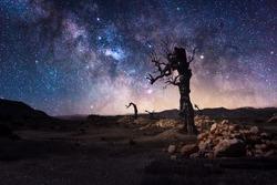 Starlights and milky way with lonely tree in dark night in Tabernas desert near Almeria-Spain