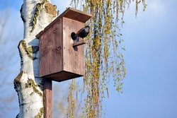 Starling on the porch of a birdhouse on a birch