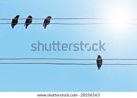 starlings on the electrical wire #28106563