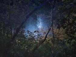 Starry night sky through tree branches.