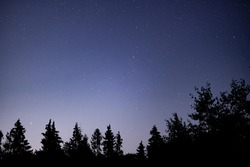 Starry night with tree silhouettes