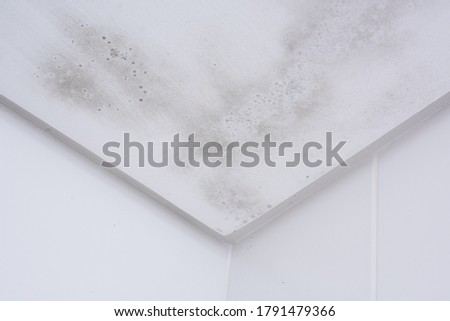 Start of mold build-up on bathroom ceiling, still with simple cleaning solution Foto stock ©