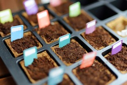 Starter tray full of biodegradable seedling pots with colorful tags attached to mark different plants. Planting flowers and vegetables on a spring time.