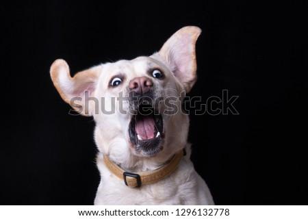 Startled dog surprised Stockfoto ©
