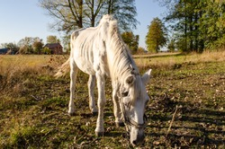 Starving neglected horse. Animal suffering from abuse