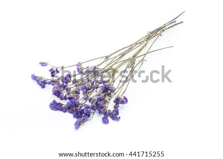 statice flower on white background