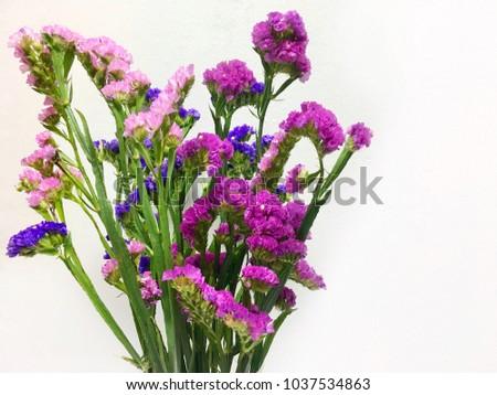 Statice flowers isolated on white background ez canvas statice flowers isolated on white background mightylinksfo