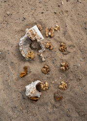 Statuette and walnuts on the sand. Shell on the sand.