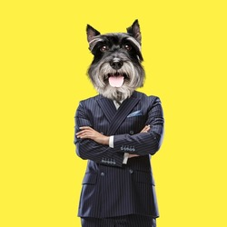 Stay confident. Dog's head on male body with crossed arms isolated on yellow background. Modern design, contemporary art collage. Inspiration, idea, trendy urban magazine style. Copy space for ad.
