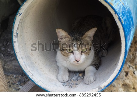 stay cute cat in earthen pipe this is his house #685292455