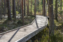 Steady curvy broad wooden construction over vulnerable surface. Walking path in raised bog natural trail through pine forest. Sunlight giving sharp shadows. Estonia, Europe.
