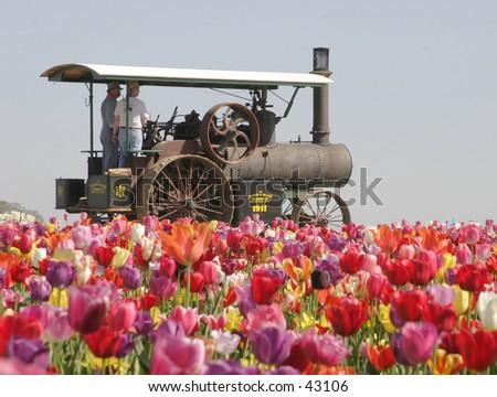 Steaming Flowers