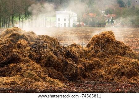 thinks return tree return feild grass cow ear grass turned