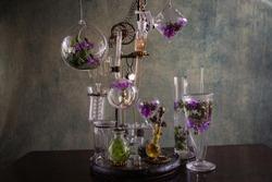 Steampunk glass and color flower distiller