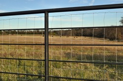 Steel cross-fencing, fence posts with square wire looking out onto brown pasture on Texas farm against pale blue sky.