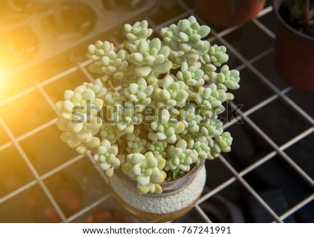 Steel wire frame is a basin of succulent plants #767241991