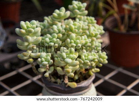 Steel wire frame is a basin of succulent plants #767242009