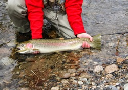 Steelhead trout caught and released on the Salmon River near Sun Valley, Idaho