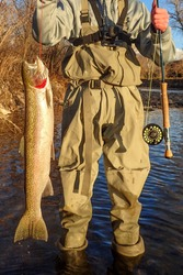 Steelhead trout caught on the Boise River in downtown Boise, Idaho